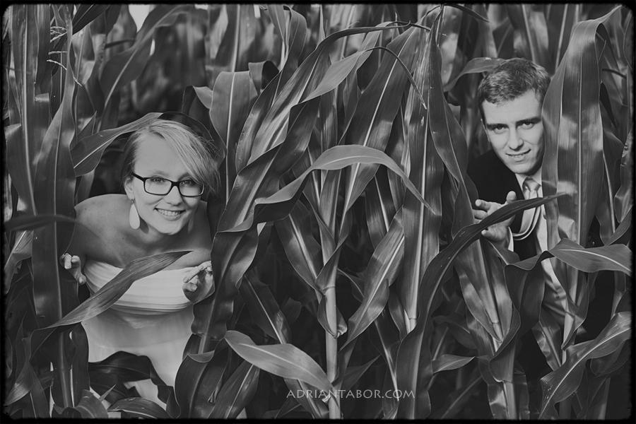 sesja ślubna w kukurydzy
